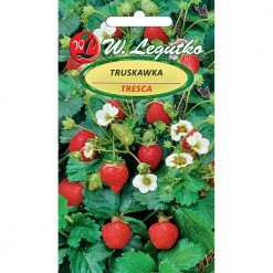 Polish Strawberry Seeds - Truskawka - Tresca-0