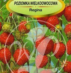 Polish Wild Strawberry Seeds - Poziomka - Regina-0