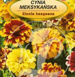 Polish Zinnia Mixed Mexican Seeds - Cynia - Meksykanska-0