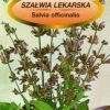 Polish Medical Salvia Seeds - Szalwia Lekarska-0