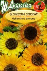 Polish Sunflower - Single-Flowered Seeds - Slonecznik Ozdobny-0