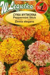Polish Zinnia Peppermint Stick Seeds - Cynia - Wytworna Daliowa Peppermint Stick-0