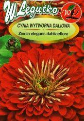 Polish Zinnia Scarlet Flame - Cynia Wytworna Daliowa-0