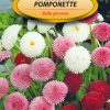 Polish Daisy Mixed Seeds - Stokrotka - Pomponette-0