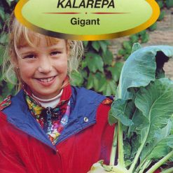 Polish Kohlrabi Seeds - Kalarepa - Giant-0