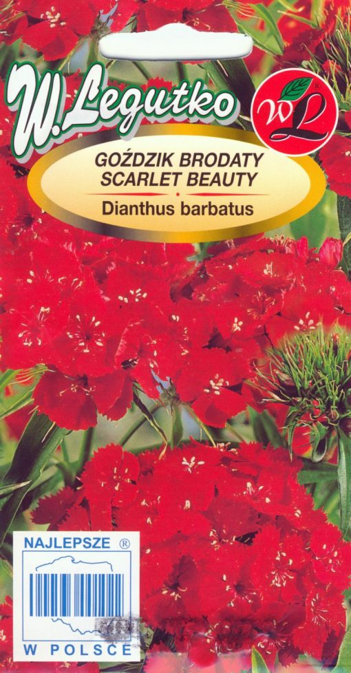 Polish Sweet William Seeds - Gozdzik - Scarlet Beauty-0