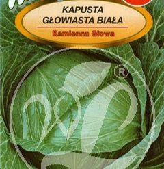 Polish Cabbage Seeds - Kapusta Glowiasta Biala - Kamienna Glowa -0