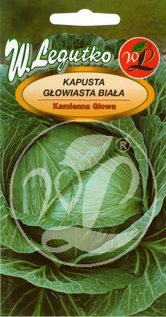 Polish Cabbage Seeds - Kapusta Glowiasta Biala - Kamienna Glowa -0