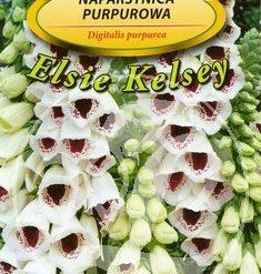 Polish Foxglove Seeds - Naparstnica Purpurowa - Elsie Kelsey-0