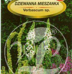 Polish Purple Mullein Seeds - Dziewanna Mieszanka - Verbascum -0