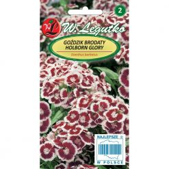 Polish Carnation Seeds - Gozdzik Brodaty - Holborn Glory-0